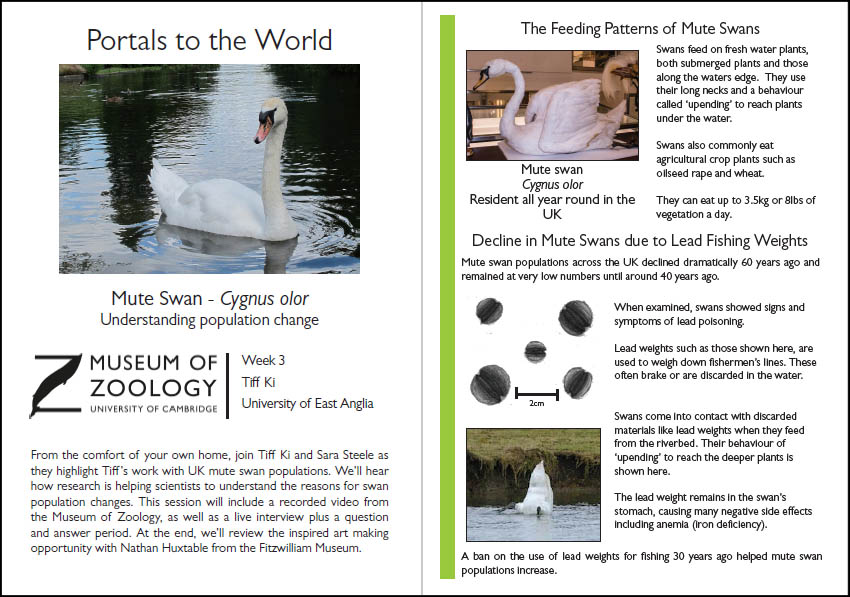 Preview of handout to accompany mute swan video
