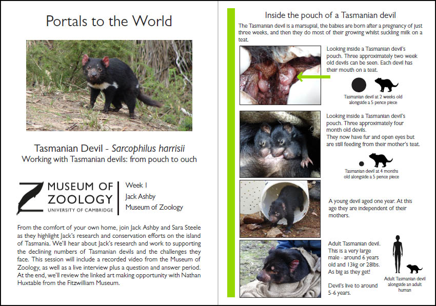 Preview of handout to accompany tasmanian devil video