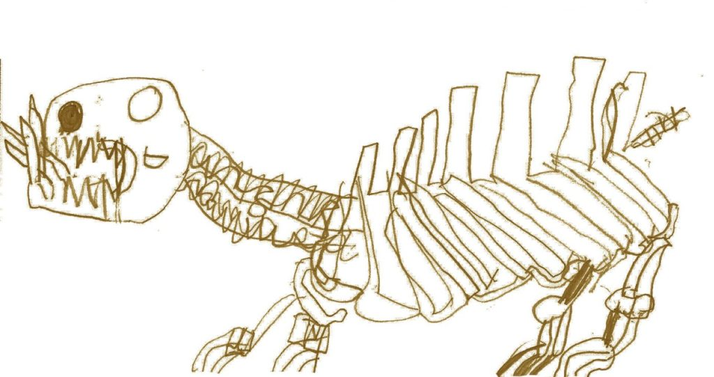 Hippo skeleton illustration by Thomas age 8
