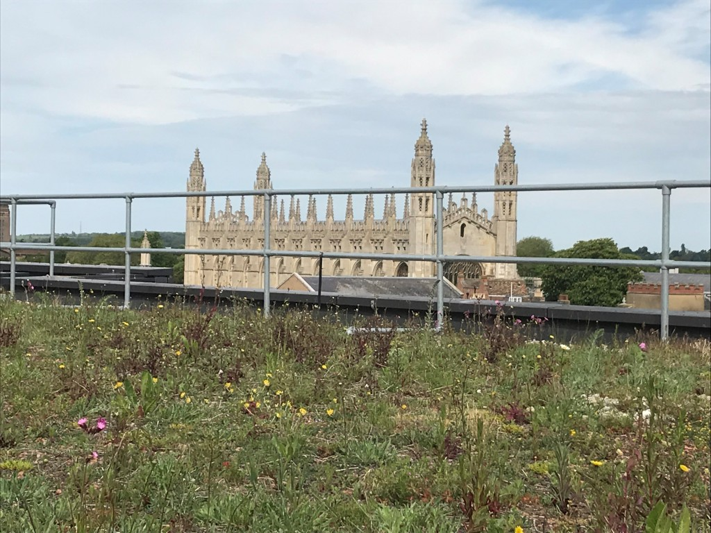 David Attenborough Building green roof in bloom showing Kings College in distance