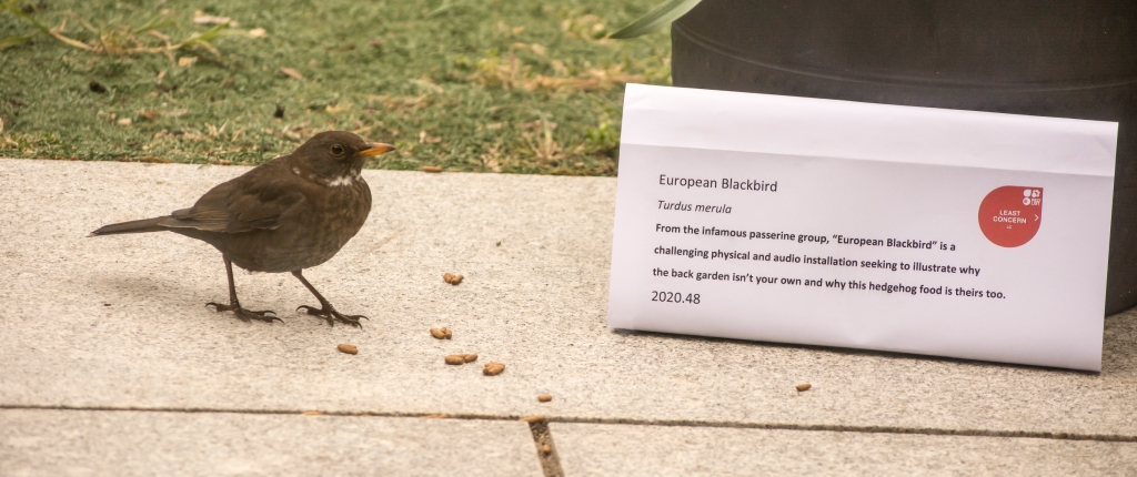 Blackbird next to a mocked-up museum label