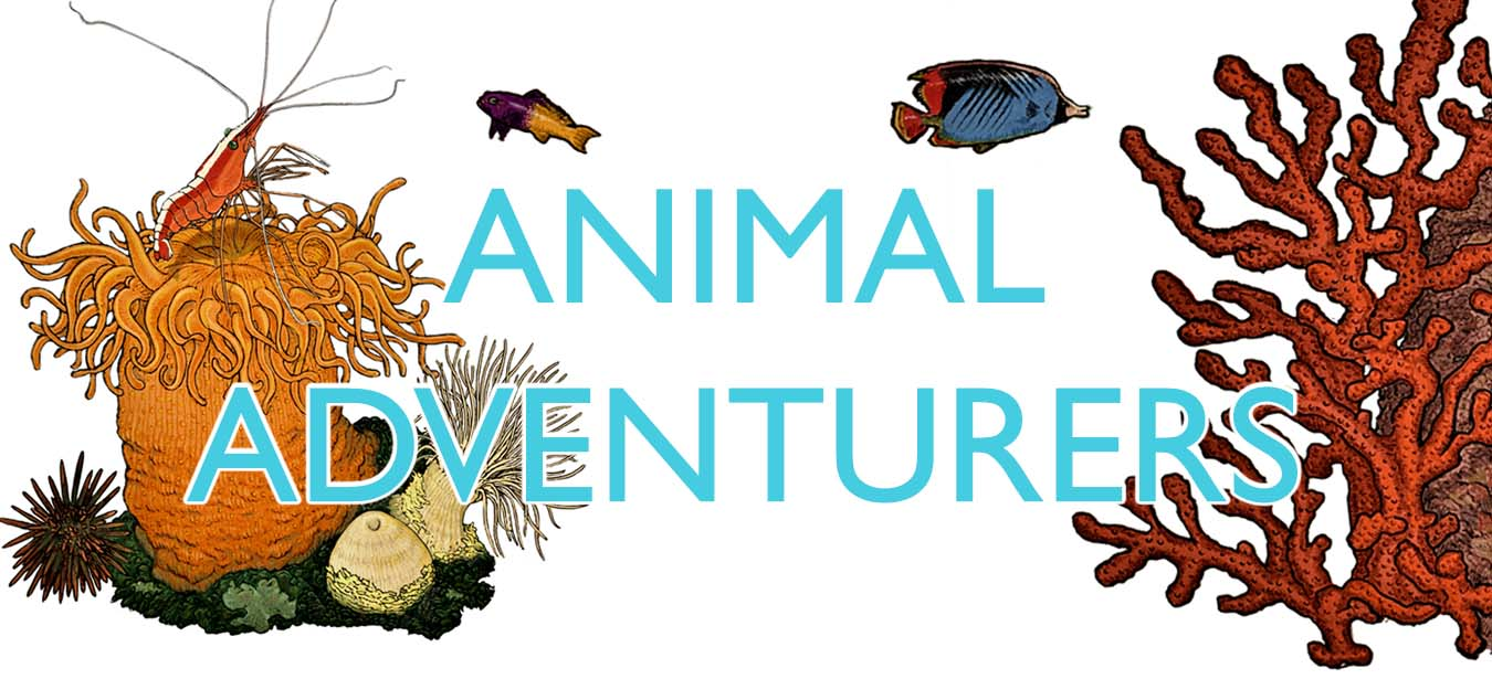 Animal adventurers banner with illustrations by Pablo Donado