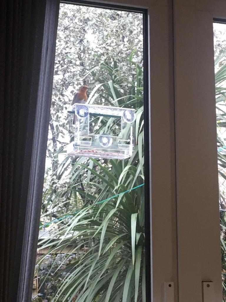 Robin visiting the bird feeder