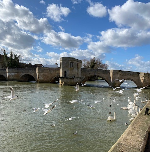 St Ives bridge and chapel, with swans and sea gulls in the foreground