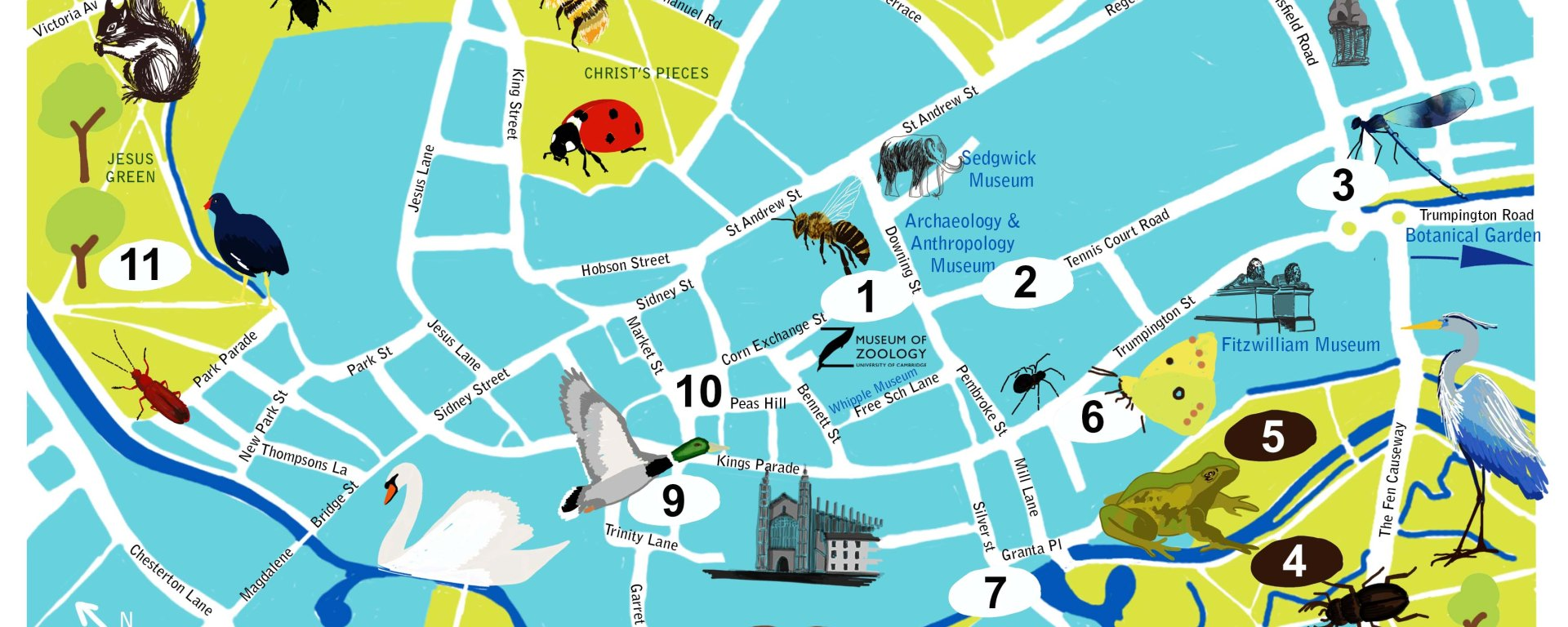 map of Cambridge city with 'spots' showing where to discover wildlife. Illustrations of animals sit on top of map