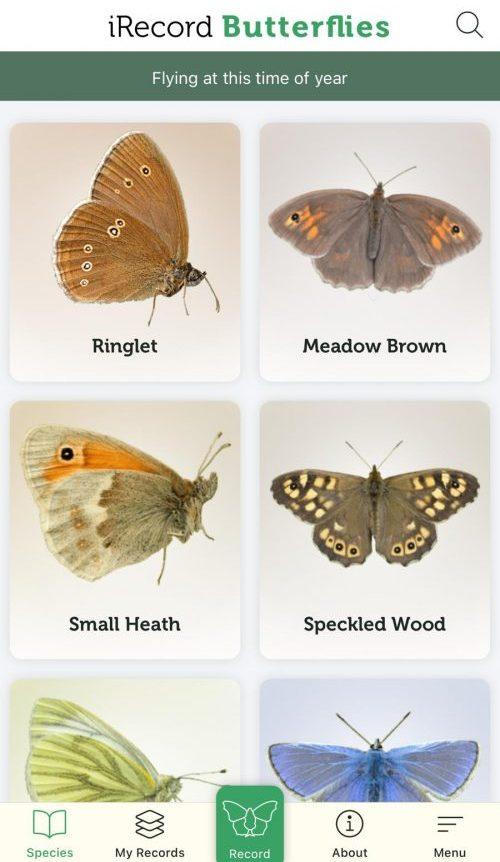 Screenshot of iRecord butterflies app on iPhone