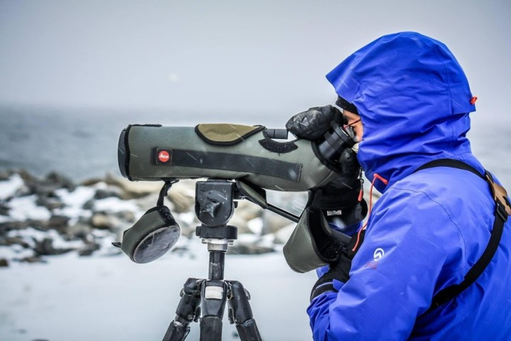 Searching for seabirds with a telescope
