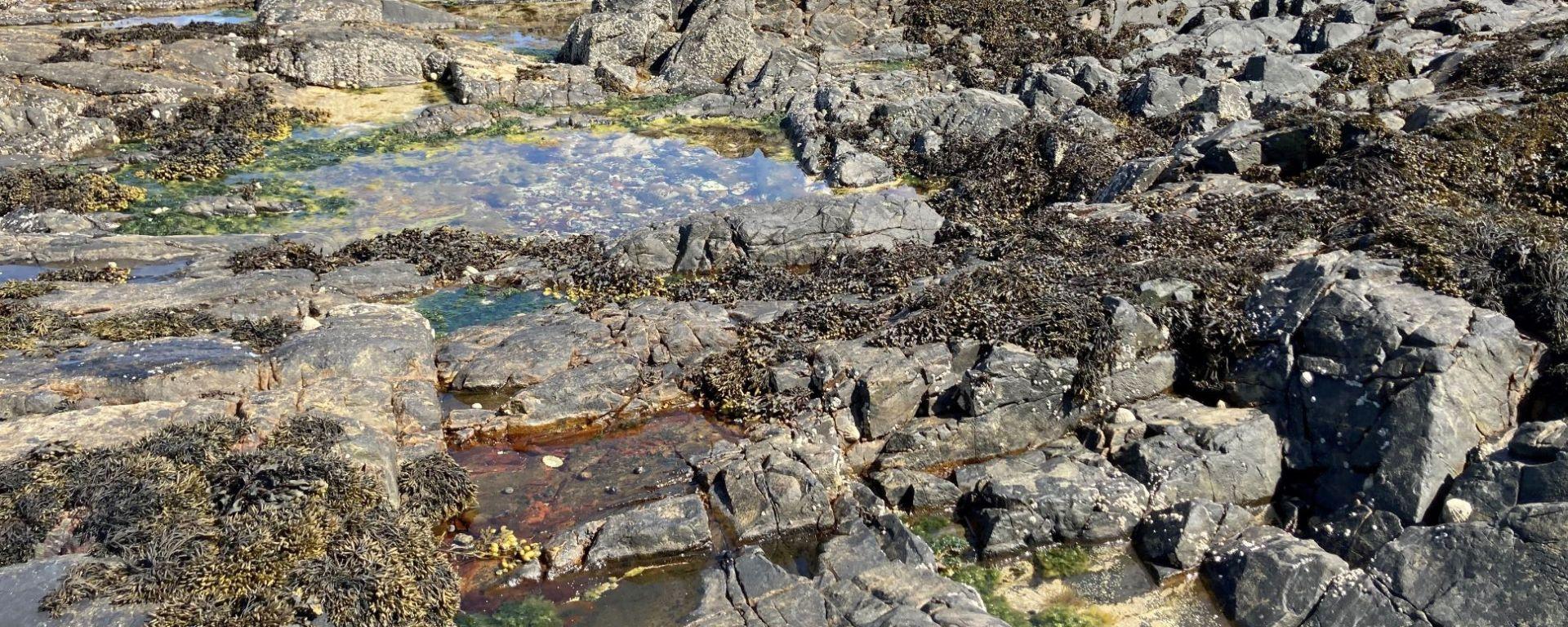 Rockpools on the west coast of Scotland