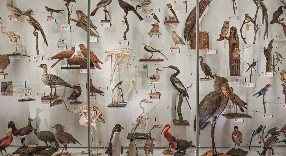 Bird display at the Museum of Zoology