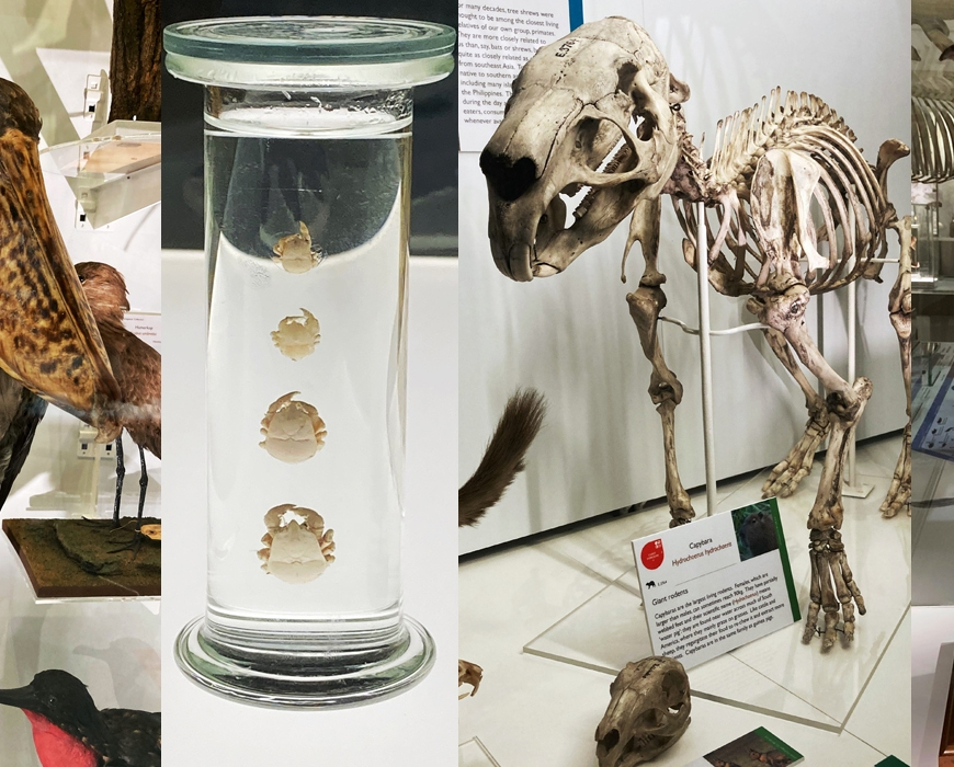 Specimens in the Museum of Zoology representing World Habitats Day